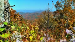 Autumn mountains and lavendar flowers 02 Stock Footage
