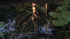 A tree reflection in a still pond - stock footage