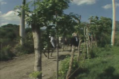 Passing horse riders Stock Footage