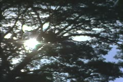 Zoom out from sun behind trees Stock Footage
