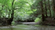 Forest and Stream Stock Footage