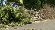 Stock Video Footage of dead trees on side walk 1