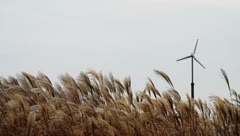 Wind turbine beyond silver feather grass on hill Stock Footage
