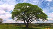 Colorful Tree - Ecological Issue Stock Footage