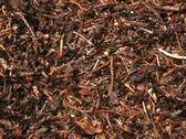 Stock Video Footage of Ants - ntsc dv
