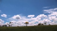 Ecological - Trees and Clouds Stock Footage