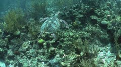A turtle swims underwater. Stock Footage