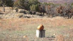 Pumpkin jackolantern explodes P HD 0474 Stock Footage