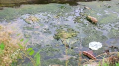 Old shoe in Polluted creek _1 Stock Footage