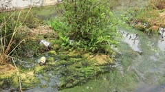 Waste in a polluted creek Stock Footage
