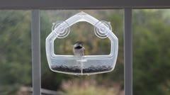 Chickadee birds fly to plastic bird feeder on window Stock Footage