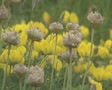 Close up of yellow flowers on grassland Footage