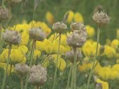 Close up of yellow flowers on grassland Stock Footage