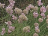 Close up of pink and yellow flowers in grassland Stock Footage