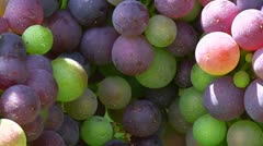 Grapes 02 Stock Footage