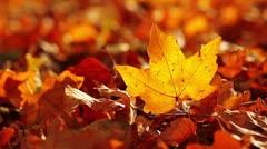 Autumn foliage Stock Footage