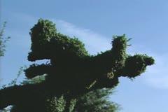 Hedge sculpture in Goofy shape Stock Footage