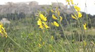 Flower and acropolis Stock Footage
