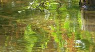 Stock Video Footage of Foliage reflections; 2