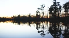 Cypress Swamp Stock Footage