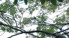 Beautiful Blackbird Hiding behind the trees in nature Stock Footage