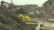 Japan Tsunami Aftermath - Flowers Stand Amidst Destruction In Rikuzentakata City Stock Footage