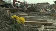 Stock Video Footage of Japan Tsunami Aftermath - Rack Focus Flowers Stand Amidst Destruction