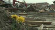 Japan Tsunami Aftermath - Rack Focus Flowers Stand Amidst Destruction Stock Footage