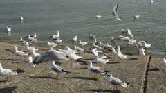 0139 seagulls in the sea coast Stock Footage