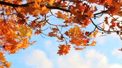 A leaf blowing wind in the sky Stock Footage