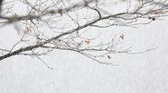 Stock Video Footage of Winter loop
