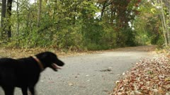 Girl jogging with dog on trail. Stock Footage