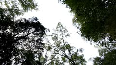 Looking up from forest ground at trees Stock Footage