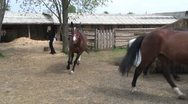 Stock Video Footage of Stable
