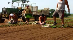 Romanian guest workers working in salad field Stock Footage