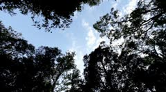 Rotating looking up at trees and clouds in forest Stock Footage