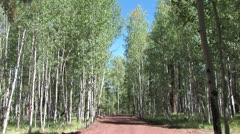 WorldClips-Pinetop Aspens-ws Stock Footage