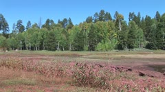 WorldClips-Pinetop Bushes and Trees-zoom Stock Footage