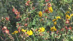 WorldClips-Pinetop Flowers-xcu Stock Footage