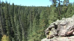 WorldClips-Pinetop Forest-xws Stock Footage