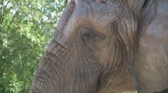 Elephant Close Up Stock Footage