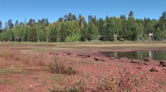 WorldClips-Pinetop Road from Lakeside-xws Stock Footage