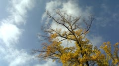 Cloudscape timelapse with autumn tree Stock Footage