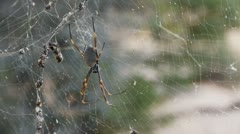 spider close up on web - stock footage