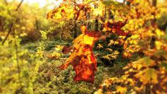Autumn gold leaf Stock Footage