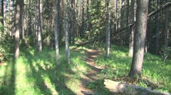 WorldClips-Pine Forest Path Stock Footage