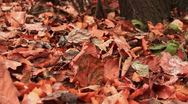 Stock Video Footage of autumn Park