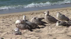 WorldClips-Sea Gulls by Sea Stock Footage
