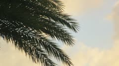 Palm tree in sunset  Stock Footage