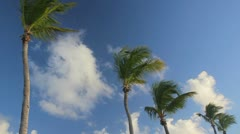 Palm tree on the blue sky Stock Footage